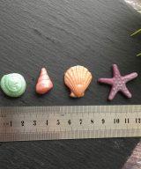edible sea shells